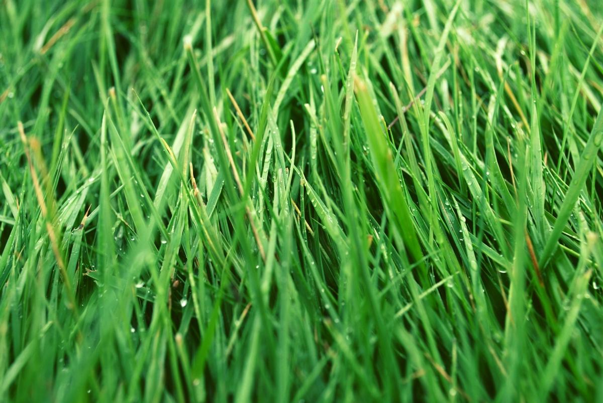 Clean green grass
